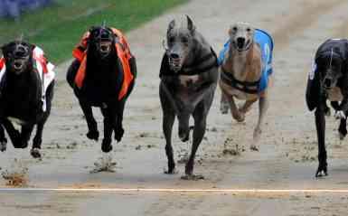 Racing - Greyhound Racing - Greyhound Derby - Wimbledon Stadium