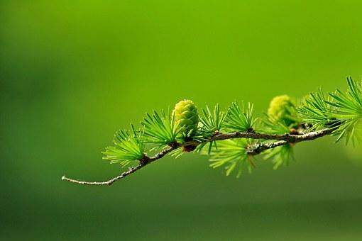 seed after its kindlarch-163340__340